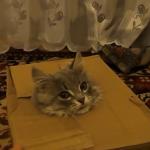 ダンボールに首を挟んで遊ぶ猫