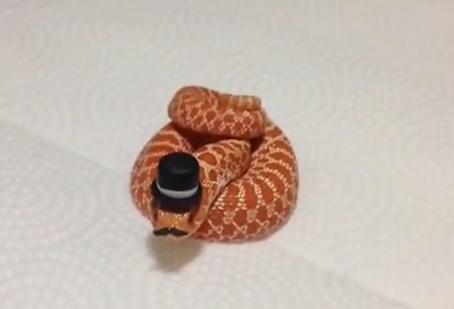 帽子をかぶった可愛い蛇