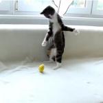 奇怪な動きで遊ぶ猫