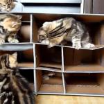 猫のマンション