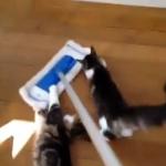 掃除の邪魔をする猫