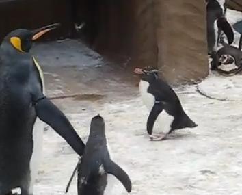 蝶々を必死になって追いかけるペンギン