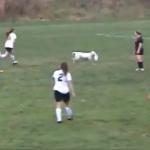 女子サッカーの試合にフリスビー犬が乱入、大暴れ