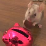 ネズミも貯金する時代!?