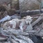 ゴミ捨て場で生きてきたワンコを救う映像