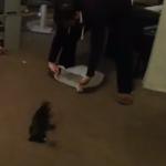 猫の運び方