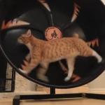 都会の猫に朗報、猫ホイールで運動不足解消