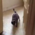 家に侵入したリスを猫が撃退