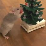 クリスマスツリーに飾り付けをするネズミ