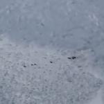 ヤギの群れに迫り来る雪崩