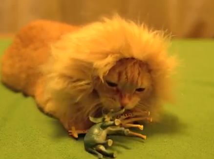 猫、気分は百獣の王?