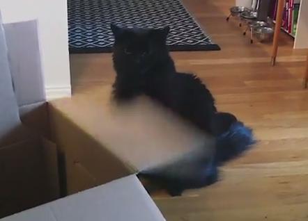 ダンボールの蓋で謎の遊びをする黒猫