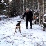 男に襲いかかる鹿