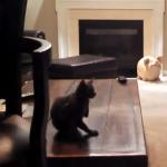 トレーニングを開始する男、その時猫が!