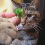 ブロッコリーを横取りする猫と犬