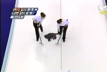 猫カーリング