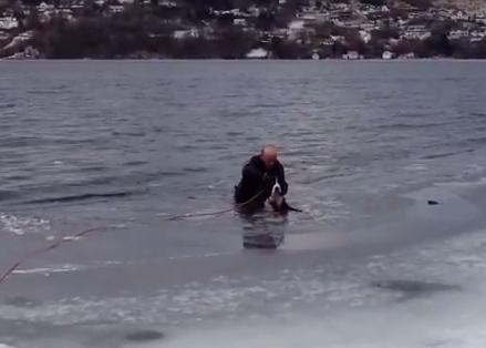 凍った湖に落ちた犬を救出する男