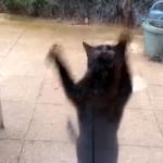 扉を開けて!全身を使ってアピールする猫