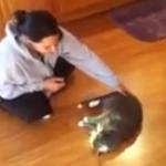 猫、カーリングの練習