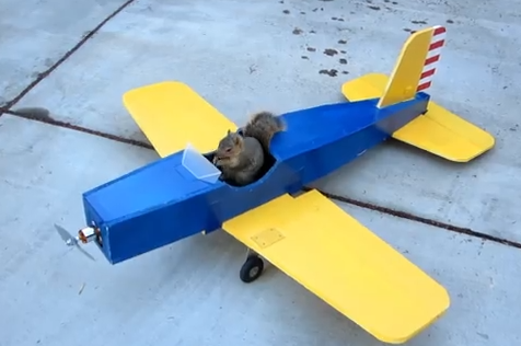 リスが飛行機を盗んで空を飛ぶ!