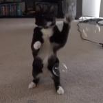 シャボン玉クラッシャー猫