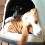 犬小屋にワンコが1匹、2匹…