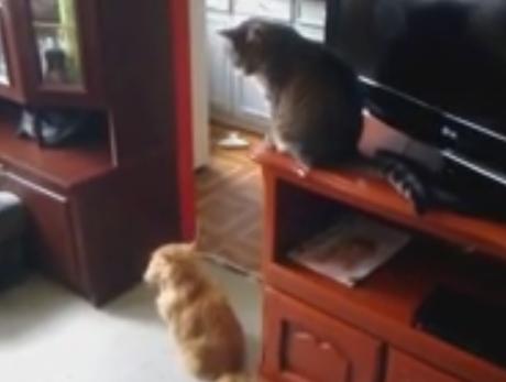 犯人は猫か犬か、あるいは…