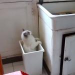 おもちゃを探してゴミ箱に2度落ちる猫