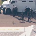 警察犬の仕事のじゃまをするパグ犬