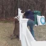 柵に逆立ちで引っかかった鹿の救助