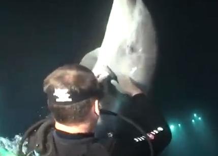 釣り針が刺さったイルカを助けるダイバー