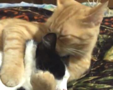 可愛い猫の動画