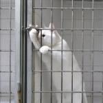 檻から脱出する白猫