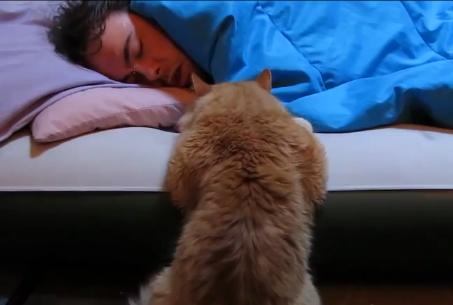 可愛い猫目覚まし映像集