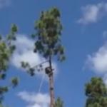 高い木を切り倒したらリスが落ちてきた!