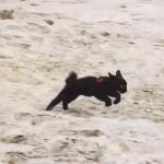 ビーチを愛する子猫