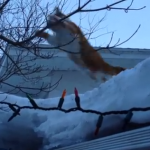 屋根からジャンプした猫が芸術点の高い失敗