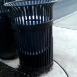 ゴミ箱の中にいたリスを覗いていたらなんと!