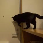 飼い主の締め出しに成功した猫