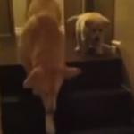 階段の下り方の教え方、猫と犬の違い
