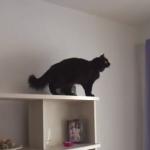 猫の任務:ネズミのおもちゃを手に入れよ!