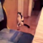 猫をチラッチラッと見ていたら…