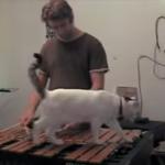 木琴の練習の邪魔をする猫