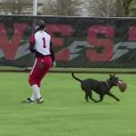 ソフトボールの試合に乱入し、グローブを盗んで走り回る犬