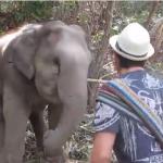 タイのクラビで子象とダンスを踊る男