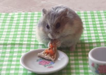 小さなピザを食べるハムスター