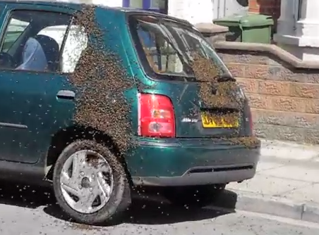 2万匹のミツバチに占領された乗用車