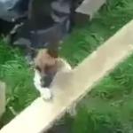 器具を使って1人でボール遊びをする犬