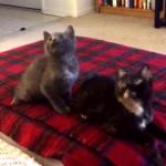 子猫のシンクロダンス