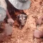 18時間土砂に埋もれていたワンコの救助
